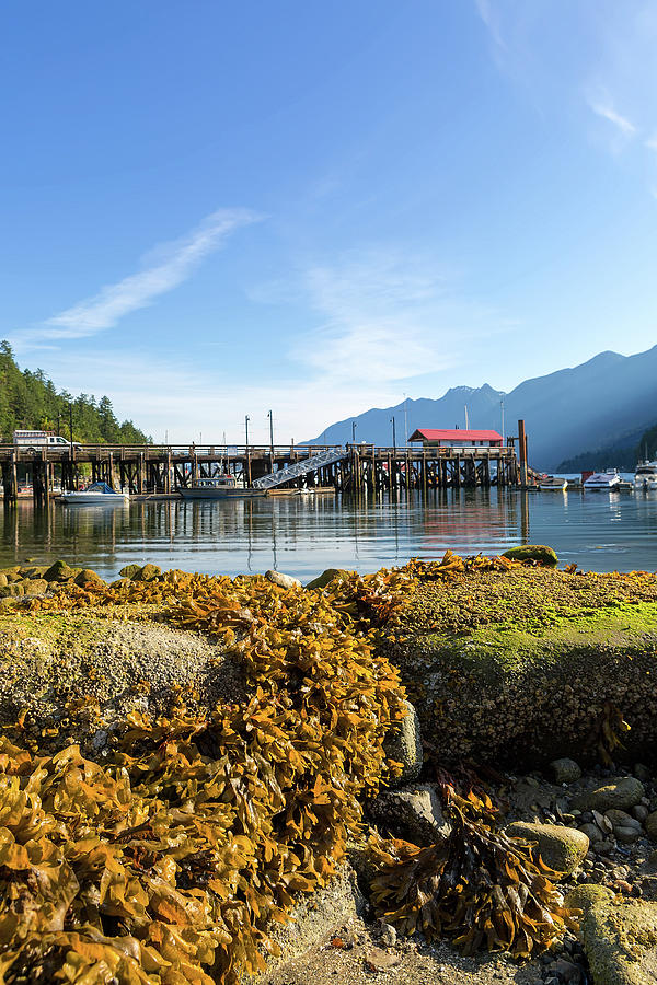 Horseshoe Bay Photograph - Low Tide At Horseshoe Bay Canada On A Sunny Day by David Gn