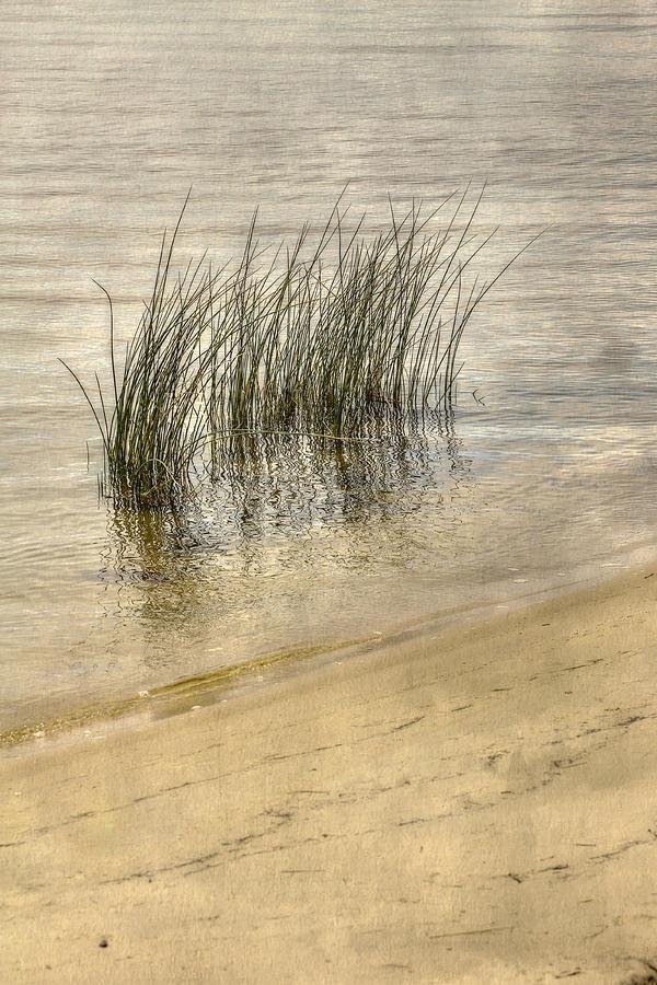 Low Tide Digital Art - Low Tide Grass by Randy Steele