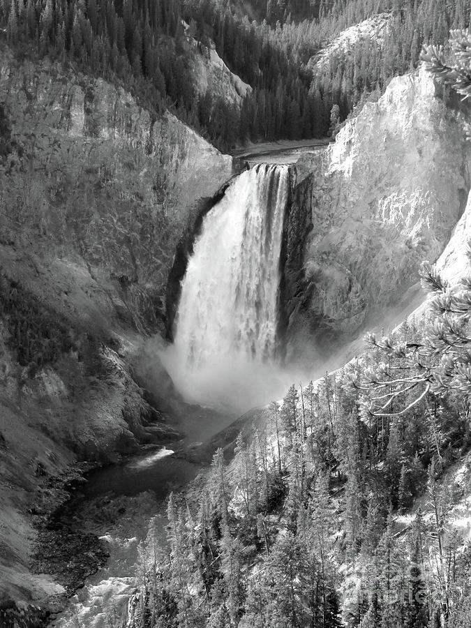 Lower Yellowstone Falls BW by Jean Wright
