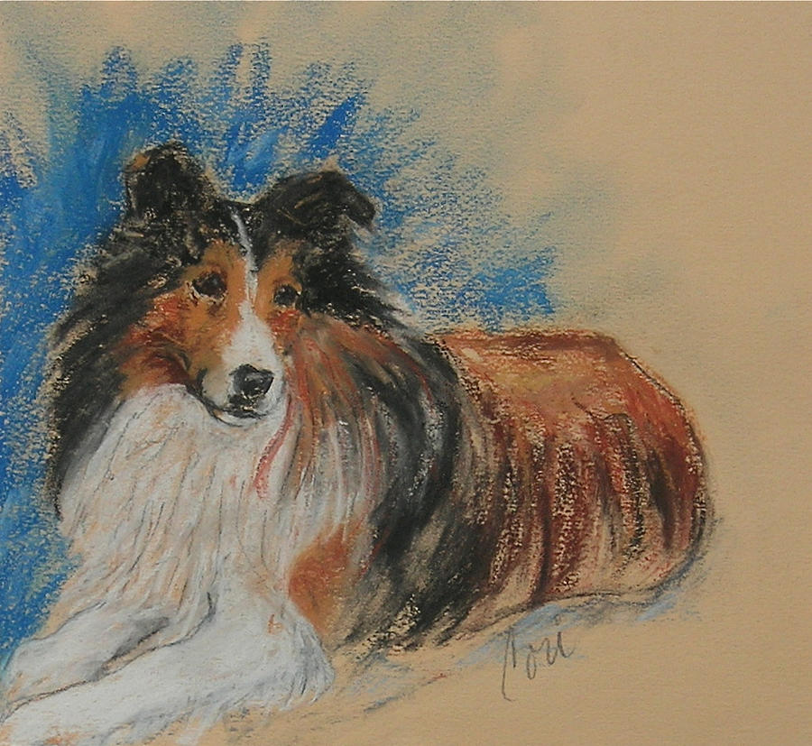 Sheltie Drawing - Loyal Companion by Cori Solomon