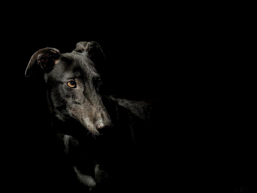 Dog Photograph - Loyality by Paul Neville