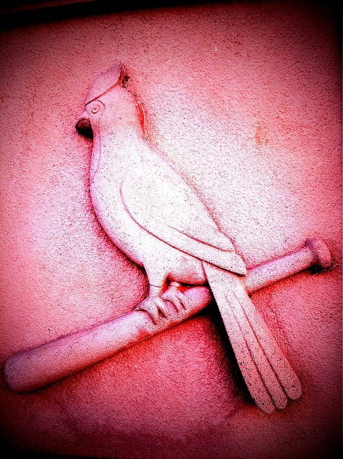 Cardinal Photograph - Lucky Bird by John McGarity