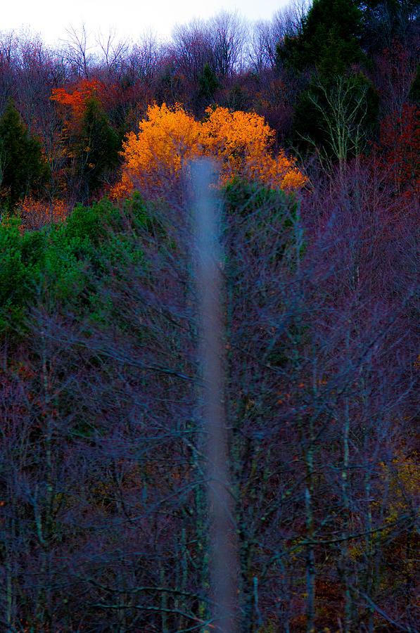 Tree Photograph - Lucky Shot by Terepka Dariusz