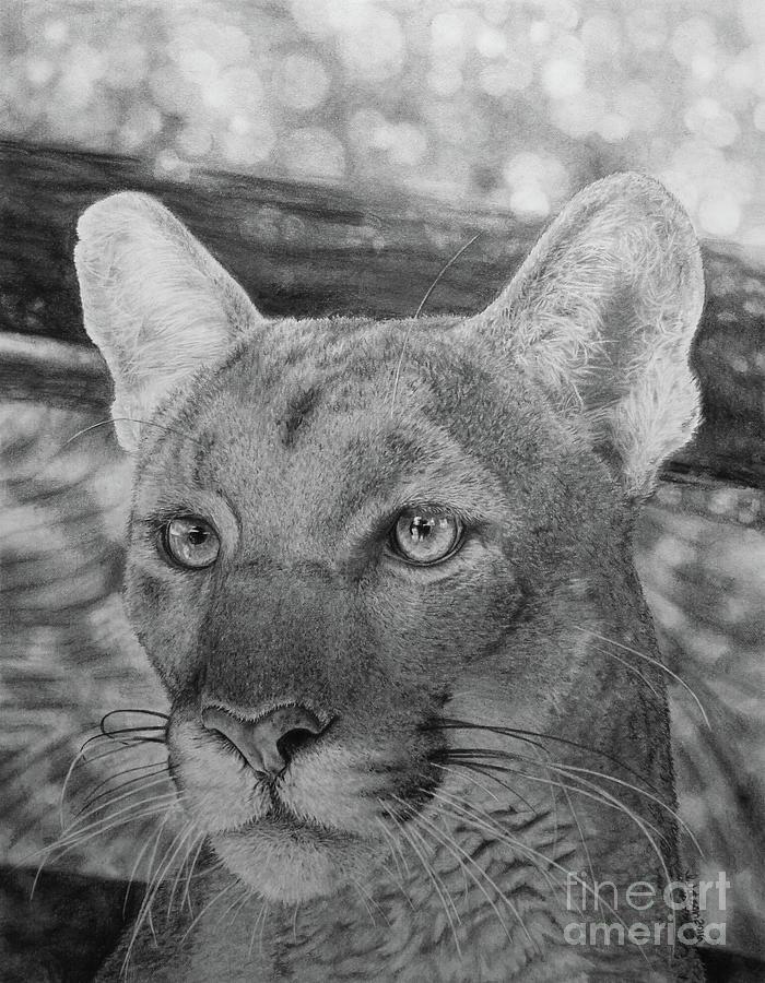 Drawing Painting - Lucy by Jennifer Watson