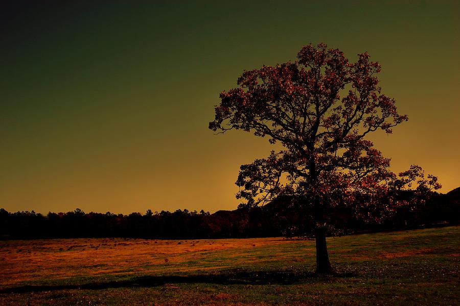 Woods Photograph - Lullabye Tree by Nina Fosdick