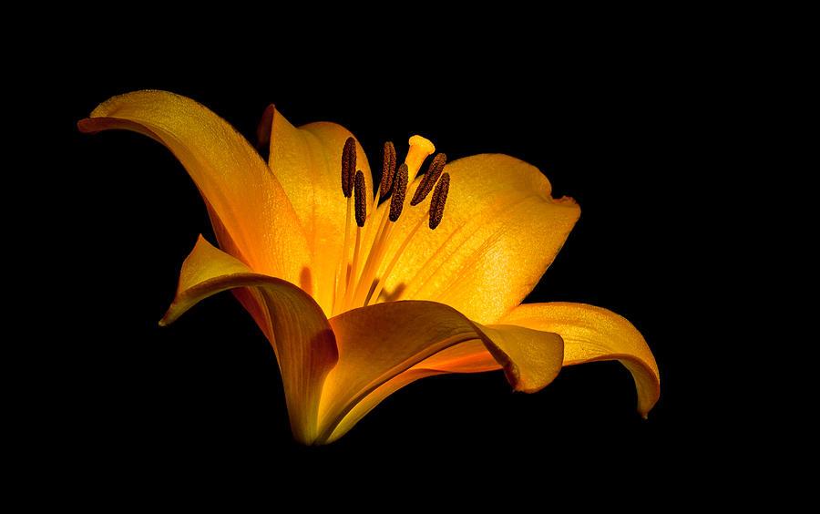luminous lilly by Len Romanick