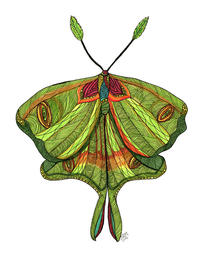 Luna Moth by Barbara McConoughey