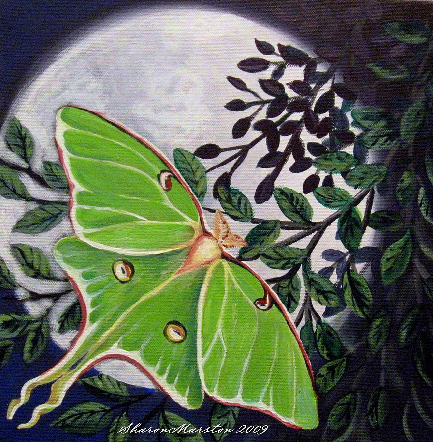 Luna Moth Painting - Luna by Sharon Marcella Marston