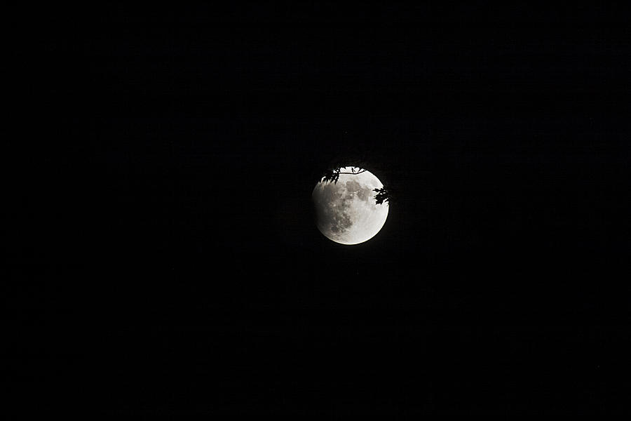 Moon Photograph - Lunar Eclipse Starting by Mark Russell