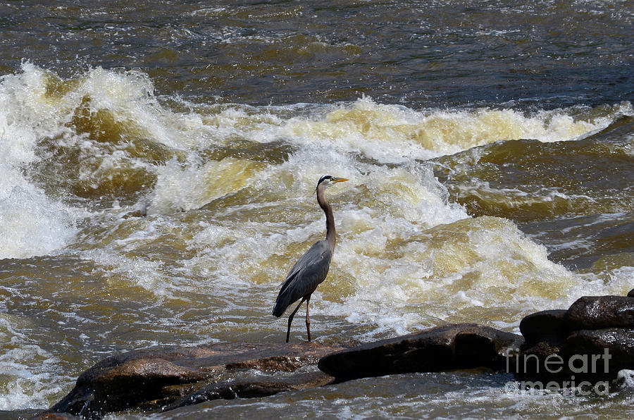 Lunch in the James River 1 by Afroditi Katsikis
