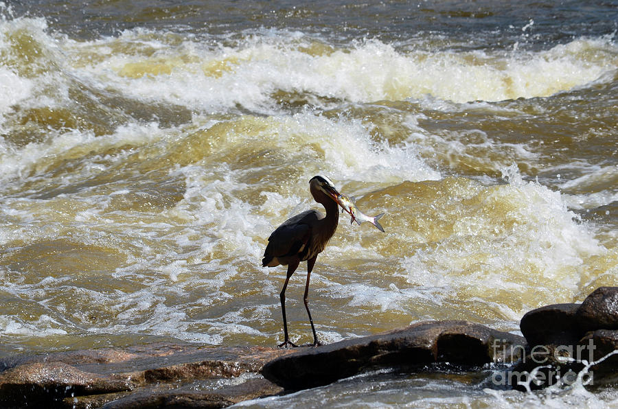 Lunch in the James River 10 by Afroditi Katsikis