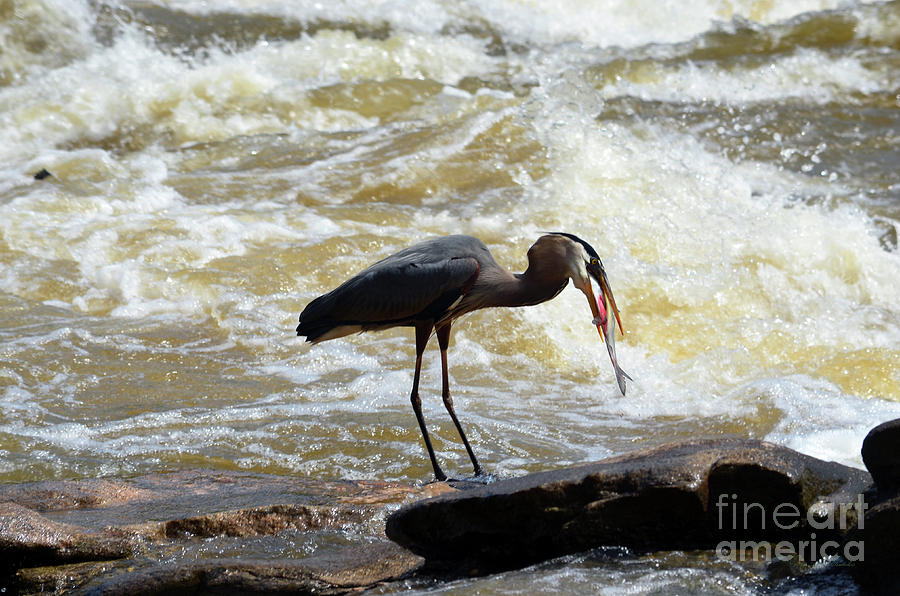 Lunch in the James River 11 by Afroditi Katsikis