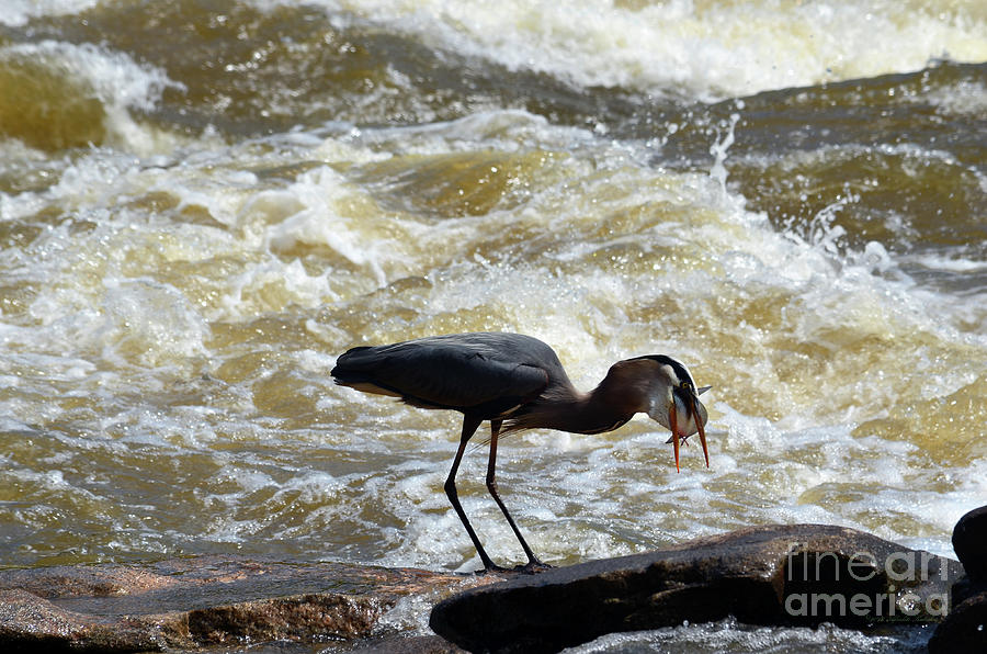 Lunch in the James River 12 by Afroditi Katsikis