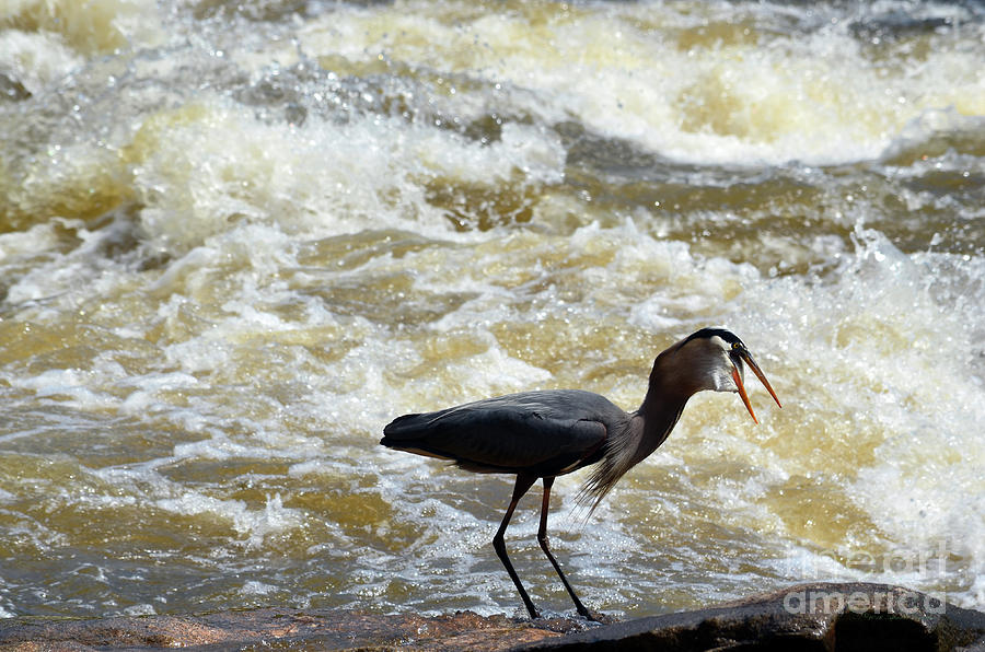 Lunch in the James River 13 by Afroditi Katsikis