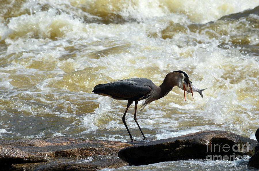 Lunch in the James River 14 by Afroditi Katsikis