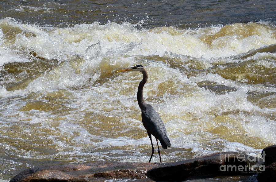 Lunch in the James River 2 by Afroditi Katsikis