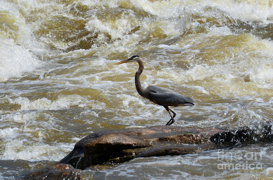 Lunch in the James River 3 by Afroditi Katsikis