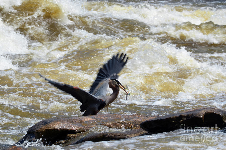 Lunch in the James River 7 by Afroditi Katsikis