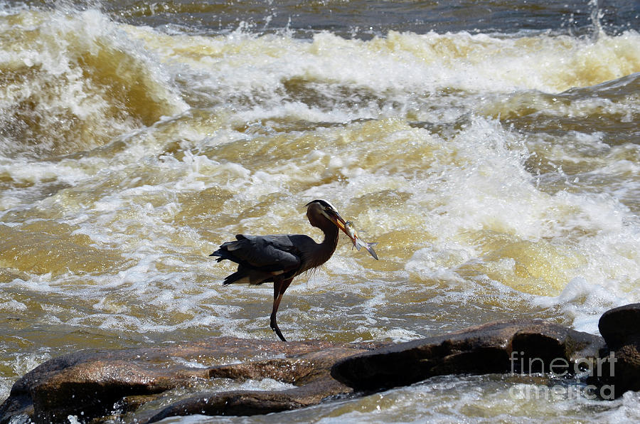 Lunch in the James River 8 by Afroditi Katsikis