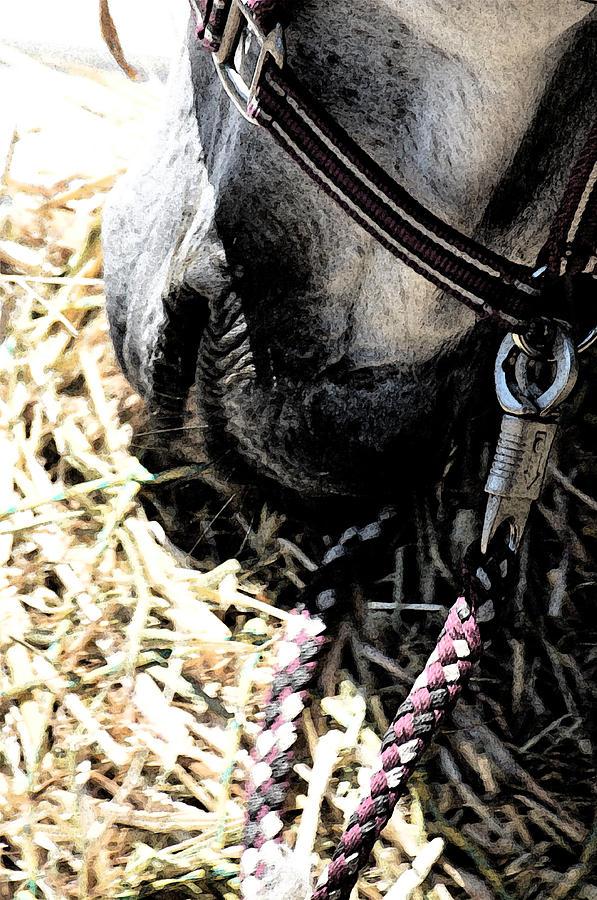 Horse Photograph - Lunch by Rachel Dubber