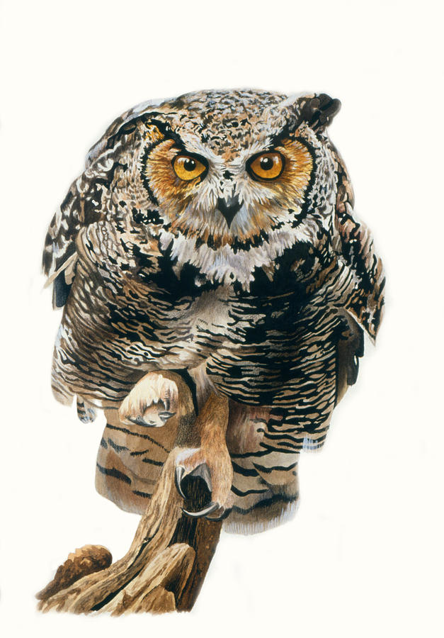 Great Horned Owl Painting - Lunchtime - Great Horned Owl by Bob Nolin