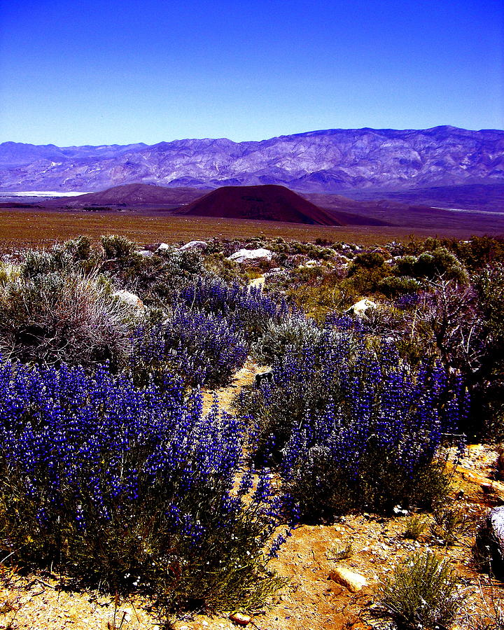 Eastern Sierra Photograph - Lupin At Taboose Creek Trail by Tina Slee