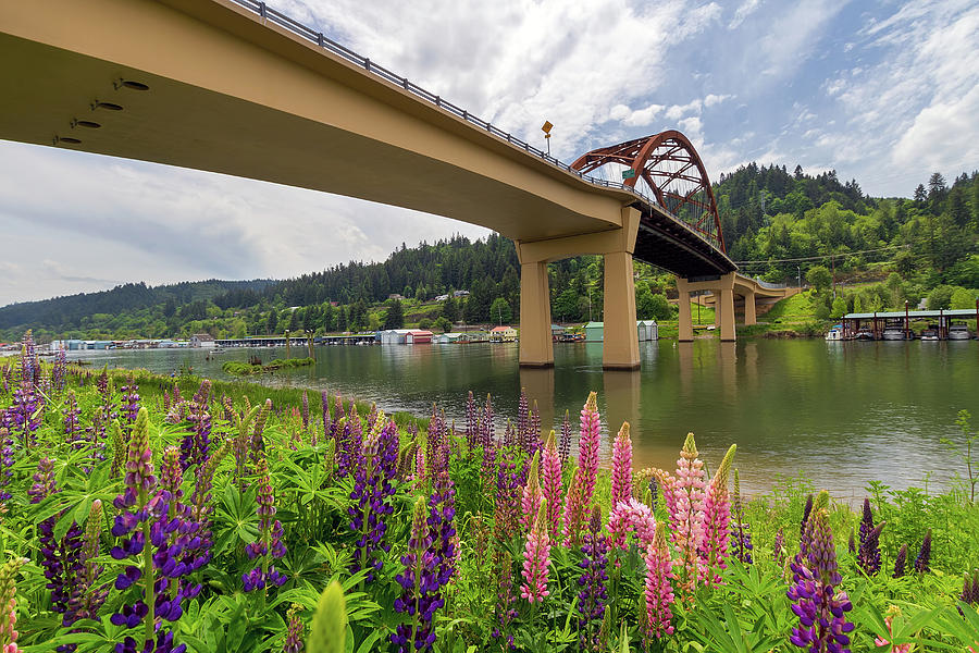 Lupine Photograph - Lupine In Bloom By Sauvie Island Bridge by David Gn