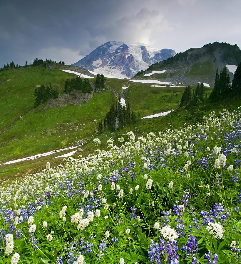 Rainier Photograph - Lupine Storm by Mike  Dawson