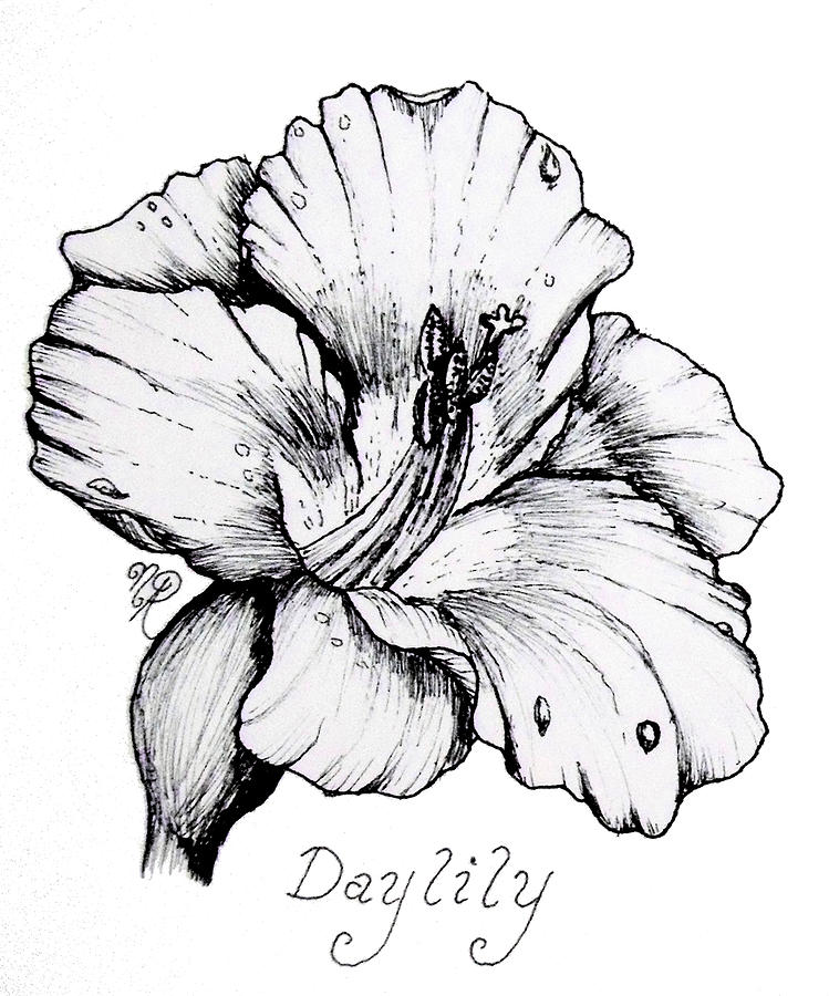 Day Drawing - Luscious Daylily  by Nicole Angell