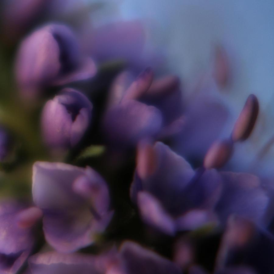 Lilacs Photograph - Luscious Lilac by Bonnie Bruno
