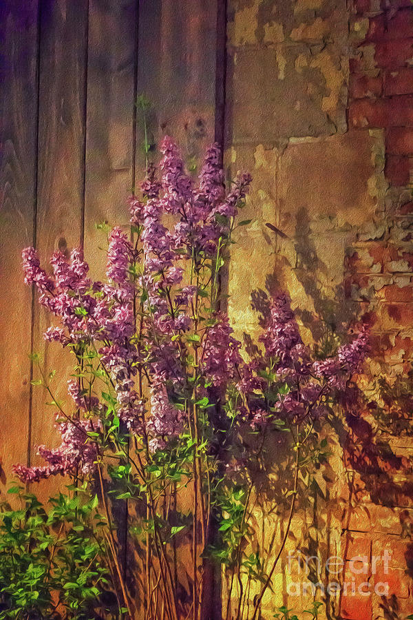 Luscious Lilacs Oil Painting Photograph