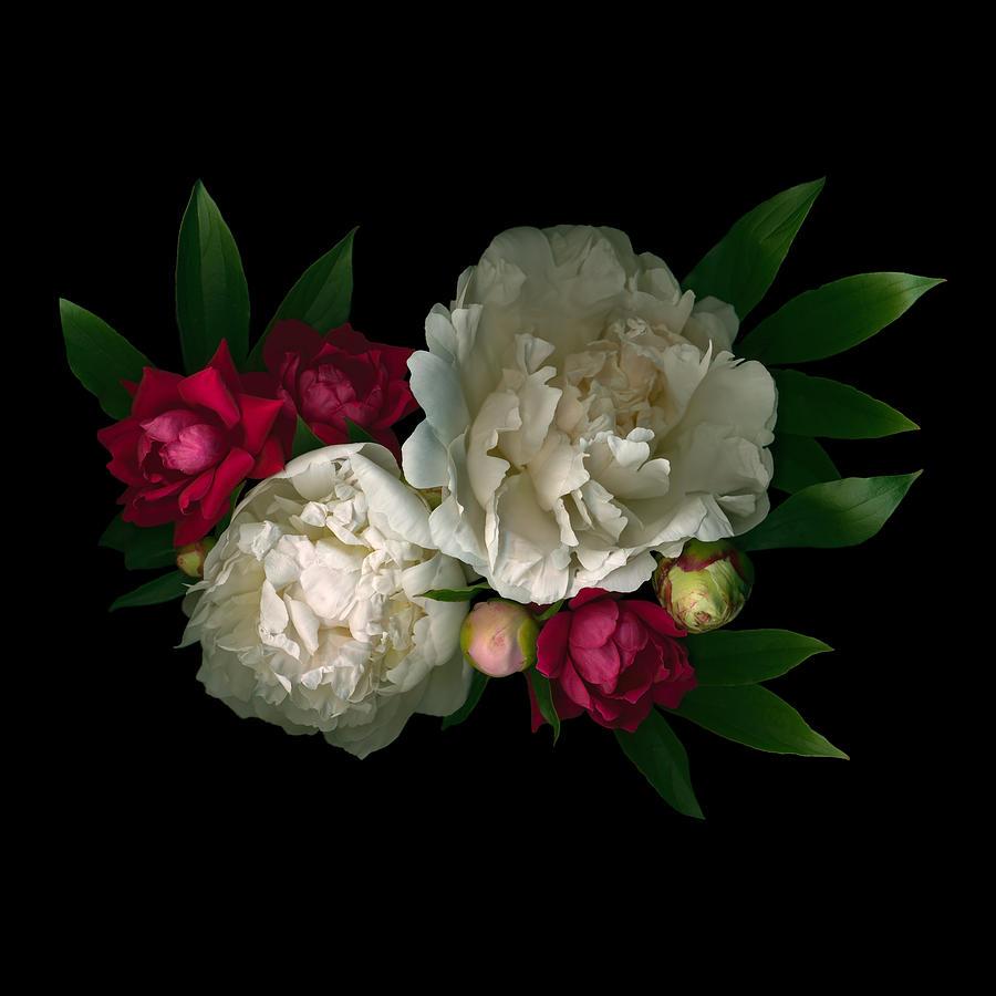 Luscious Peonies by Deborah J Humphries