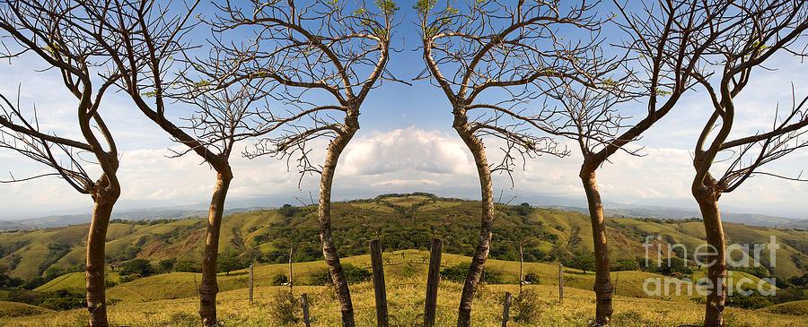 Trees Photograph - Lush Land Leafless Trees IIi by Madeline Ellis