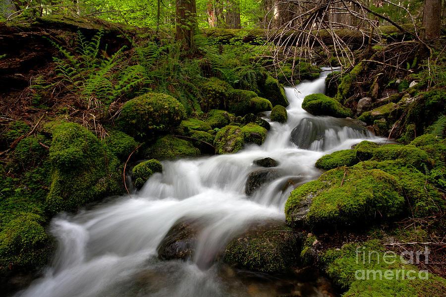 Cascades Photograph - Lush Stream by Mike Reid