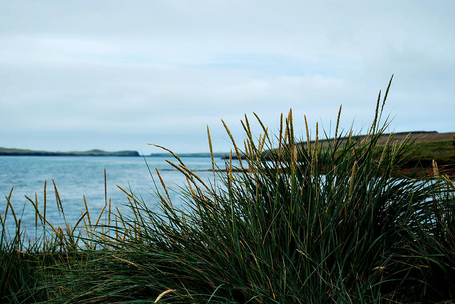 Lyme Grass by Marilynne Bull