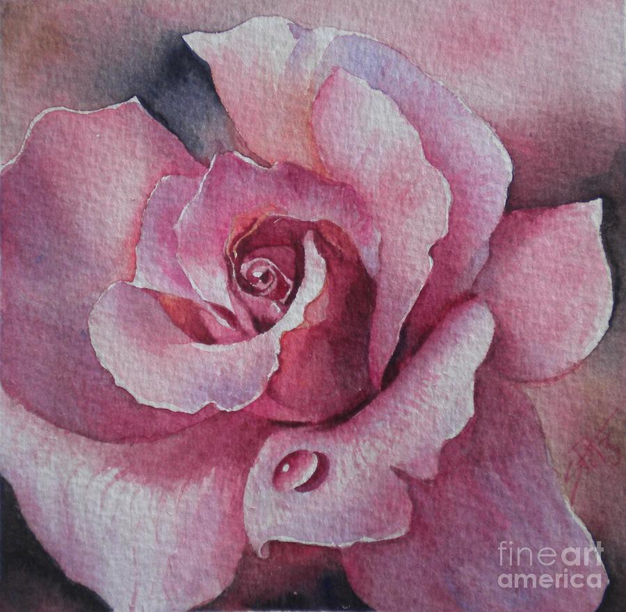 Lyndys rose by Sandra Phryce-Jones