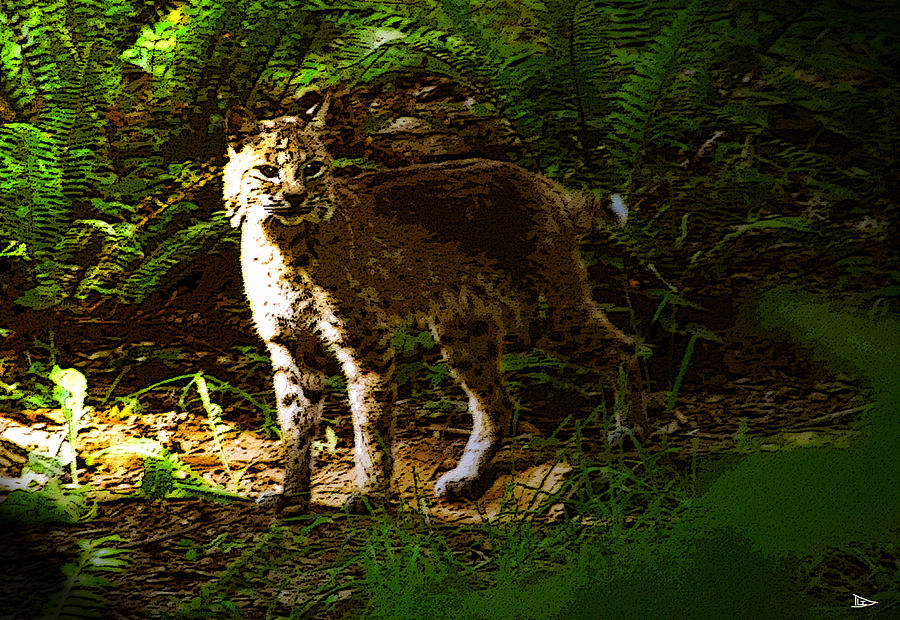 Artwork Painting - Lynx Rufus by David Lee Thompson