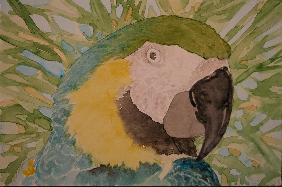 Bird Painting - Macaw - WIP by Theresa Higby