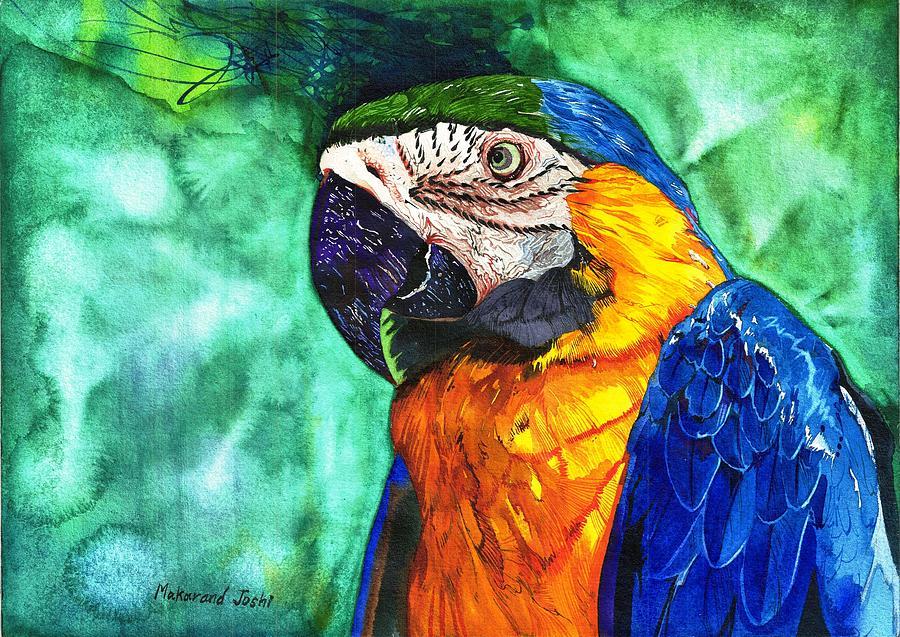 Macaw by Makarand Joshi