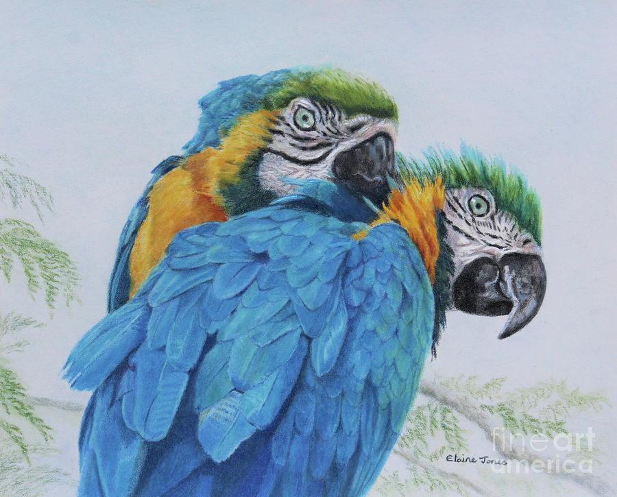 Macaw Mischief by Elaine Jones
