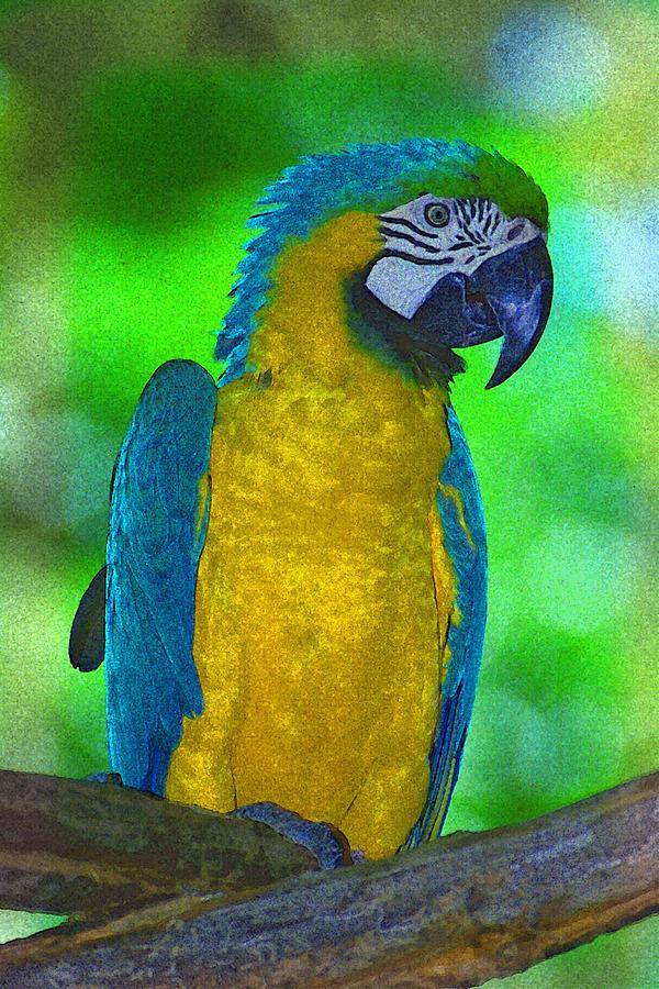 Parrot Digital Art - Macaw by Richard Nickson