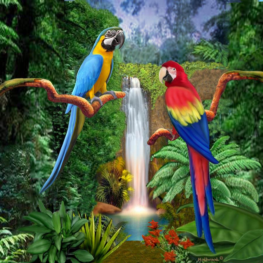 The Parrots Tour