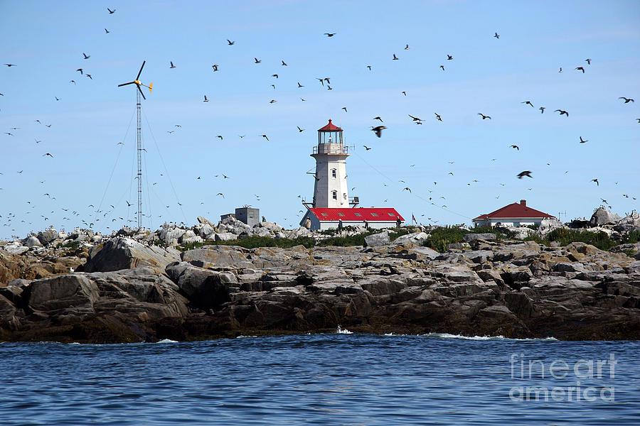 Machias Seal Island Photograph - Machias Seal Island Lighthouse by Brenda Giasson