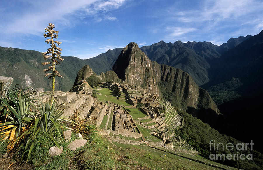 Machu Picchu Photograph - Machu Picchu And Bromeliad by James Brunker