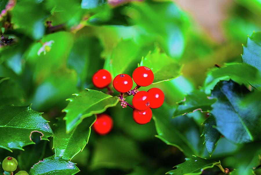 Macro Berries - 1202 by G L Sarti