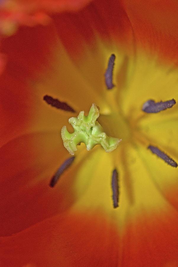 Macro Bloom - PLA238 by G L Sarti