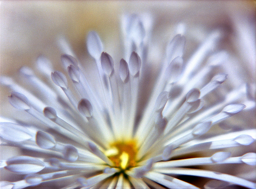 Macro Photograph - Macro Flower 3 by Lee Santa