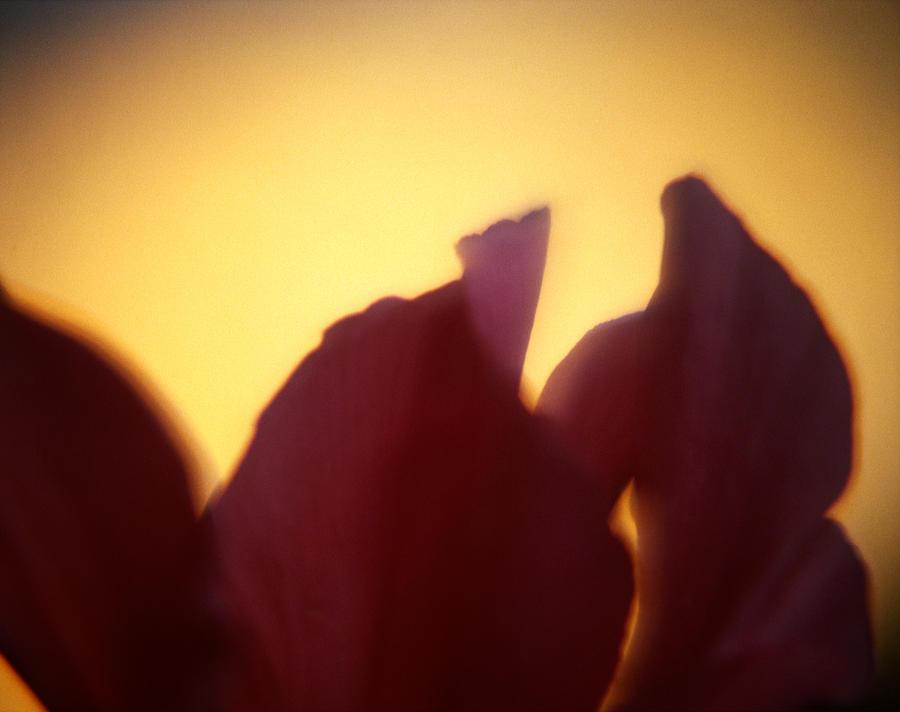 Flower Photograph - Macro Flower by Lee Santa
