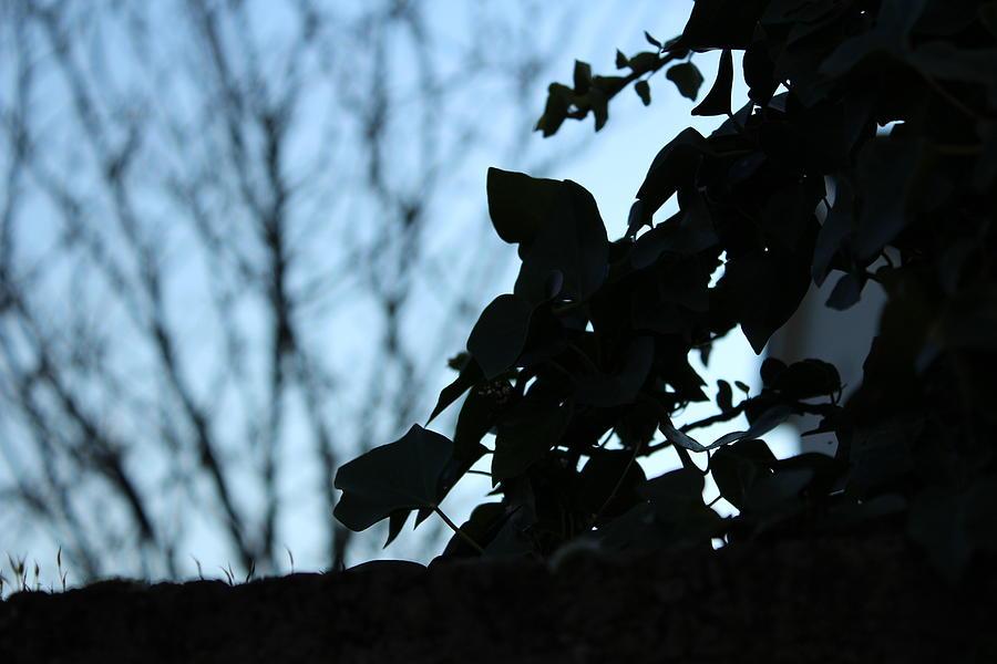 Macro Photograph - Macro On Leaves by Alireza Khoddam