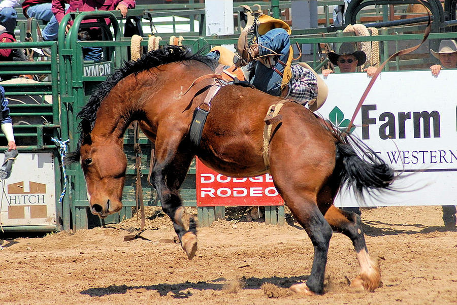 Rodeo Photograph - Mad As Hell by Cheryl Poland